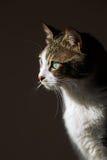 Cute Cat. The Cute Cat, pet tabby Stock Images