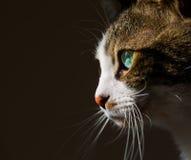 Cute Cat. The Cute Cat, pet tabby Stock Image