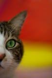 Cute Cat. The Cute Cat, pet tabby Stock Photo