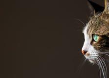 Cute Cat. The Cute Cat, pet tabby Stock Photos