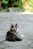 Cute cat photographed from behind. Sitting relaxed and daydreaming Stock Images
