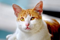 Cute cat, photographed from the front. Are looking at front with  cute face, seems curious about something Stock Photo