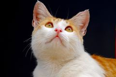 Cute cat, photographed from the front. Are looking up, like he was hoping something Royalty Free Stock Photo