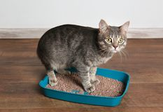 Cute cat in plastic litter box. On floor Royalty Free Stock Photo