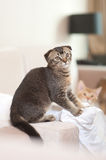 Cute cat playing stock image