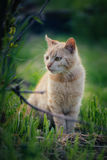 Cute cat playing in garden. Royalty Free Stock Images