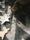 Cute cat playing with holiday ornaments at girl legs in christmas woolen socks and stylish reindeer toy. Top view. Atmospheric co. Zy image, warm winter mood royalty free stock photo