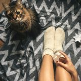 Cute cat playing with holiday ornaments at girl legs in christmas woolen socks and stylish reindeer toy in hands. Top view. Atmospheric cozy image, warm winter royalty free stock images