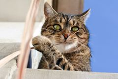 Cute cat playing outdoors Royalty Free Stock Photo