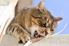 Cute cat playing outdoors Royalty Free Stock Photos