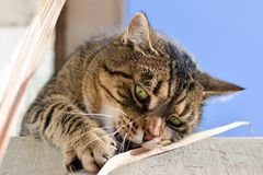 Cute cat playing outdoors Royalty Free Stock Image