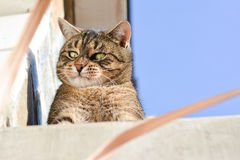 Cute cat playing outdoors Stock Photos