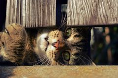 Cute cat playing outdoors Stock Photo