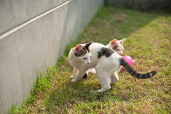 Cute cat playing pink ball in the green grass Stock Images