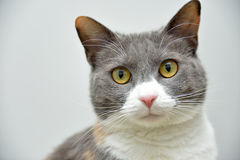 Cute cat portrait Stock Photography