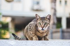 Cute cat portrait. Autumn mood. stock photos