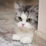 Cute cat portrait, square photo royalty free stock photos