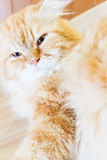 Cute cat portrait Stock Image