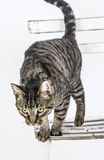 Cute cat poses on an old chair Royalty Free Stock Photography