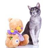 Cute cat posing near a teddy toy Royalty Free Stock Photography