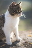 Cute cat Stock Photo