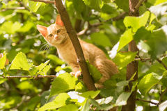 Cute cat posing on a tree. Stock Images