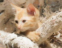 Cute cat. This cute cat post with the rope Stock Image