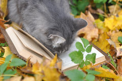 Cute cat reading book Royalty Free Stock Photography