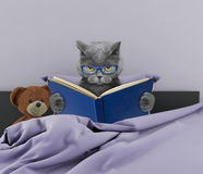 Cute cat reading a book in bed Royalty Free Stock Photos