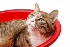 Cute cat in red basin stock photo