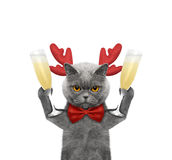 Cute cat in reindeer antlers with a glass of champagne Stock Photos