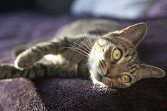 Cute cat relaxes and dreams on a bed Stock Images