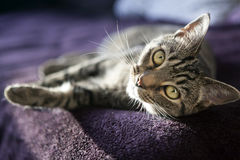 Cute cat relaxes and dreams on a bed Stock Photo