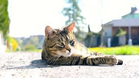 Cute cat relaxes in the street Stock Photos