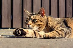 Cute cat relaxes Royalty Free Stock Photography