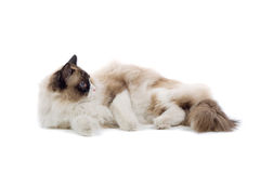 Cute cat relaxing Stock Photography