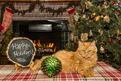 Christmas Cat Relaxing by the fireplace. A cute cat relaxing by the Christmas Tree next to the fireplace Stock Photo