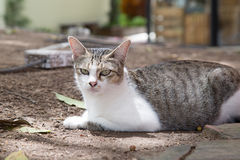 Cute cat relaxing in the garden. Royalty Free Stock Photo