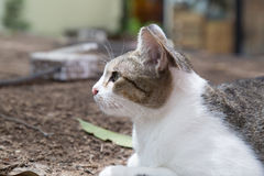 Cute cat relaxing in the garden. Royalty Free Stock Photos