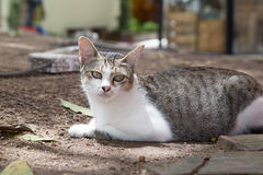 Cute cat relaxing in the garden. Royalty Free Stock Images