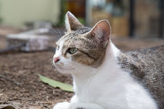 Cute cat relaxing in the garden. Royalty Free Stock Photography