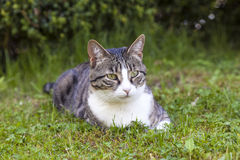 Cute cat relaxing in the garden Royalty Free Stock Image