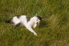 A cute cat relaxing on the grass in the garden, springtime happyness shot with copyspace Royalty Free Stock Photography