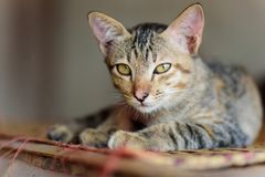 Cute cat relaxing on the mat stock photography
