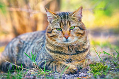 Cute cat relaxing outdoor Royalty Free Stock Photo