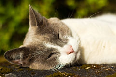Cute cat relaxing on rock in the sun Royalty Free Stock Images