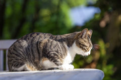 Cute cat relaxing on a wooden table. In the garden Stock Photography