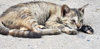 Cute cat rest on floor on sunny day royalty free stock images