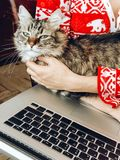 Cute cat resting in hands. woman in pajamas holding and petting Royalty Free Stock Photo