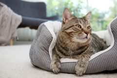 Cute cat resting on pet bed royalty free stock photography